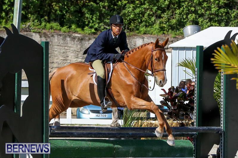 Horse-Show-Bermuda-December-13-2014-45