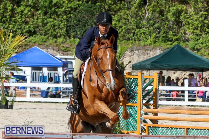 Horse-Show-Bermuda-December-13-2014-47