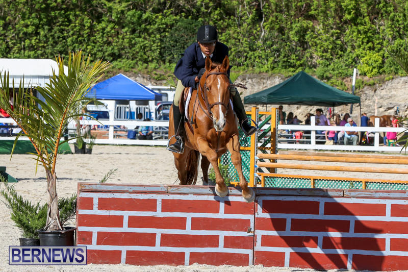 Horse-Show-Bermuda-December-13-2014-48