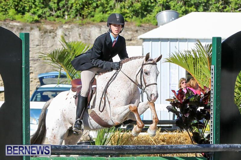 Horse-Show-Bermuda-December-13-2014-5