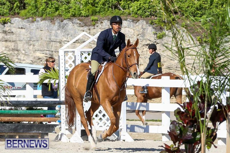 Horse-Show-Bermuda-December-13-2014-50