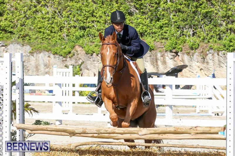 Horse-Show-Bermuda-December-13-2014-51