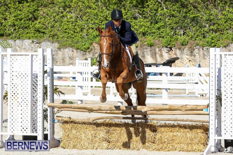 Horse-Show-Bermuda-December-13-2014-52