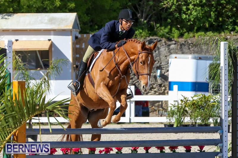 Horse-Show-Bermuda-December-13-2014-53