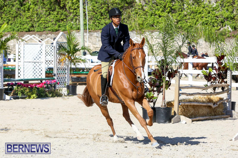 Horse-Show-Bermuda-December-13-2014-54