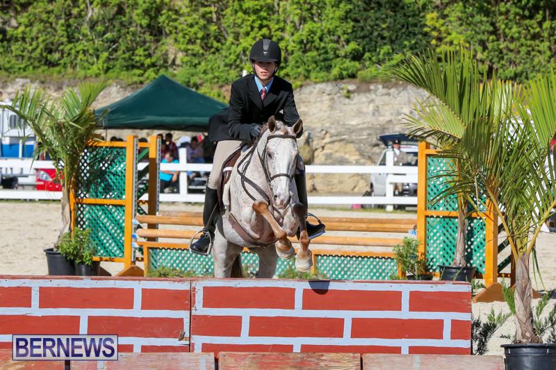 Horse-Show-Bermuda-December-13-2014-6