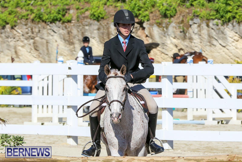 Horse-Show-Bermuda-December-13-2014-7