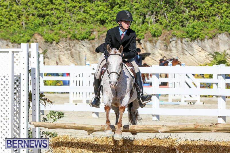Horse-Show-Bermuda-December-13-2014-8