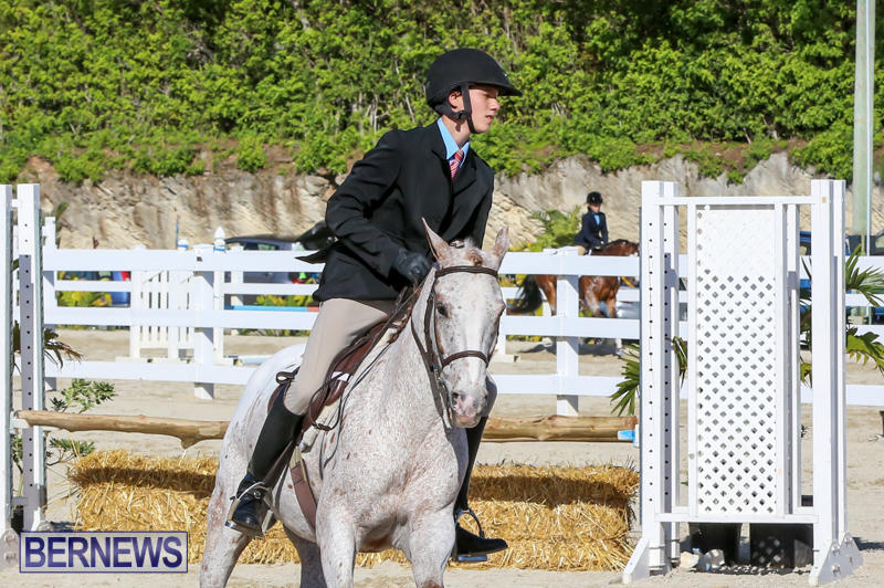 Horse-Show-Bermuda-December-13-2014-9
