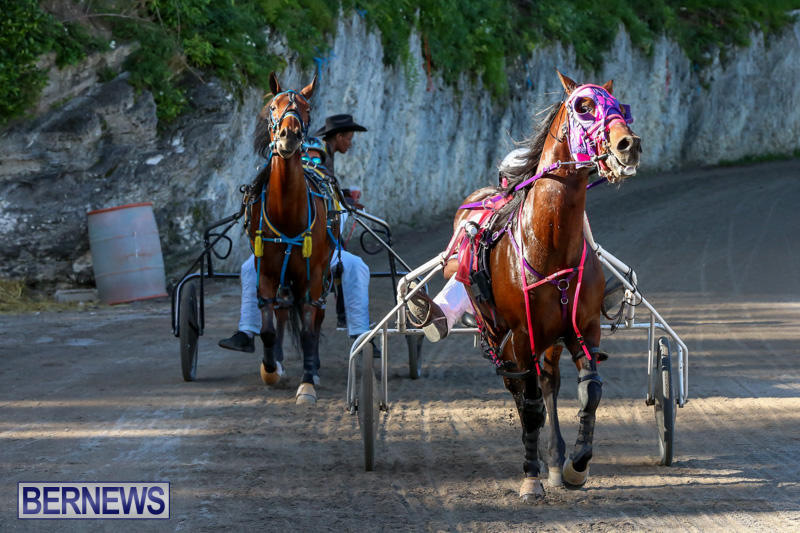 Harness-Pony-Racing-Bermuda-January-1-2015-1