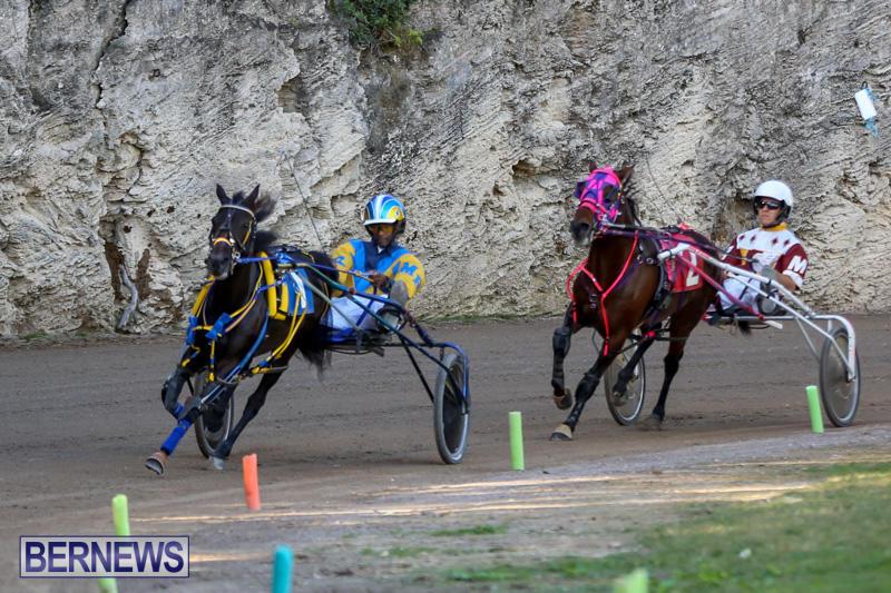 Harness-Pony-Racing-Bermuda-January-1-2015-10