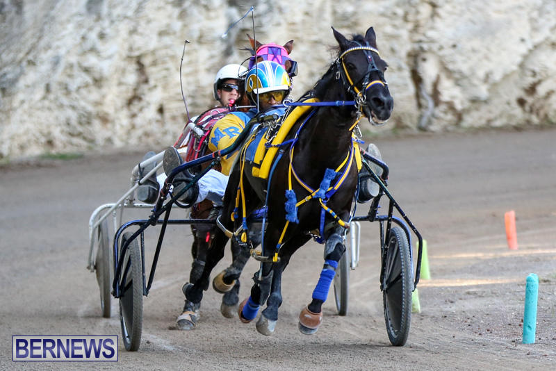 Harness-Pony-Racing-Bermuda-January-1-2015-12
