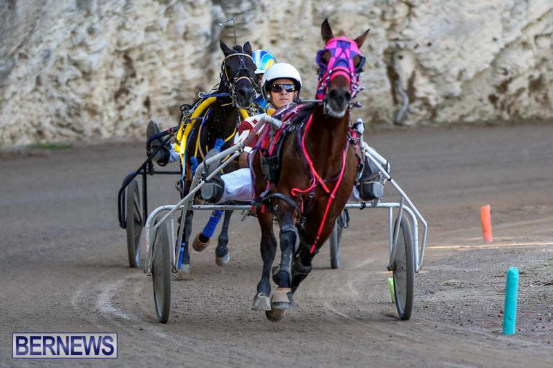 Harness-Pony-Racing-Bermuda-January-1-2015-13