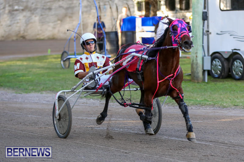 Harness-Pony-Racing-Bermuda-January-1-2015-15