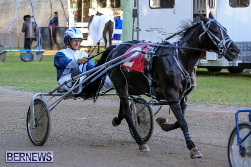 Harness-Pony-Racing-Bermuda-January-1-2015-19