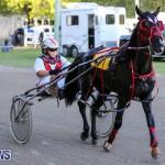 Harness Pony Racing Bermuda, January 1 2015-24
