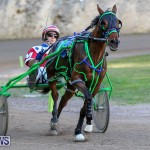 Harness Pony Racing Bermuda, January 1 2015-29