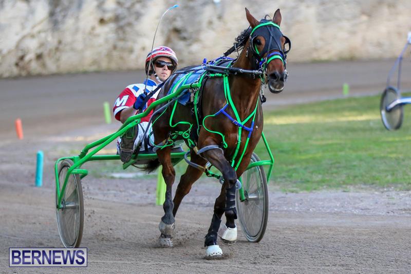 Harness-Pony-Racing-Bermuda-January-1-2015-29
