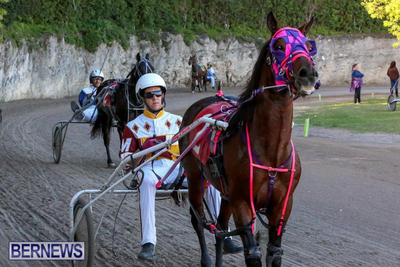 Harness-Pony-Racing-Bermuda-January-1-2015-5
