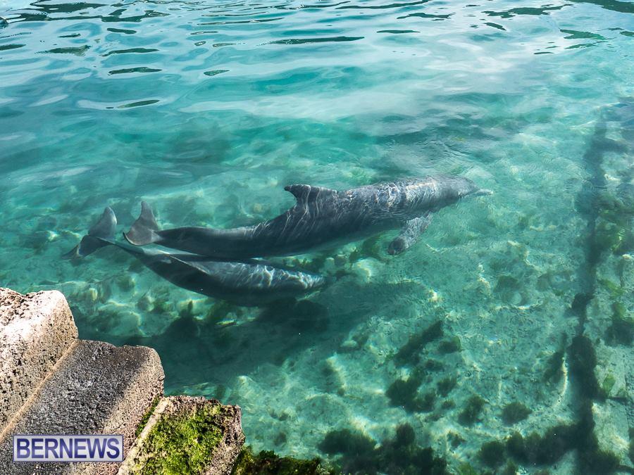 Dolphin Quest Bermuda generic