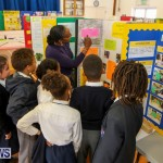 Elliott Primary Science Fair Bermuda, February 25 2015-2