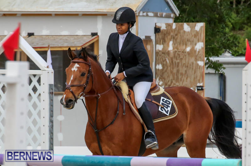 FEI-World-Jumping-Challenge-Bermuda-February-22-2015-17