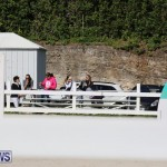 FEI World Jumping Challenge Bermuda, February 22 2015-60
