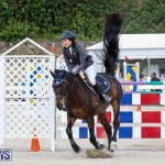 FEI World Jumping Challenge Bermuda, February 22 2015-8