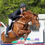 FEI World Jumping Challenge Bermuda, February 22 2015-80