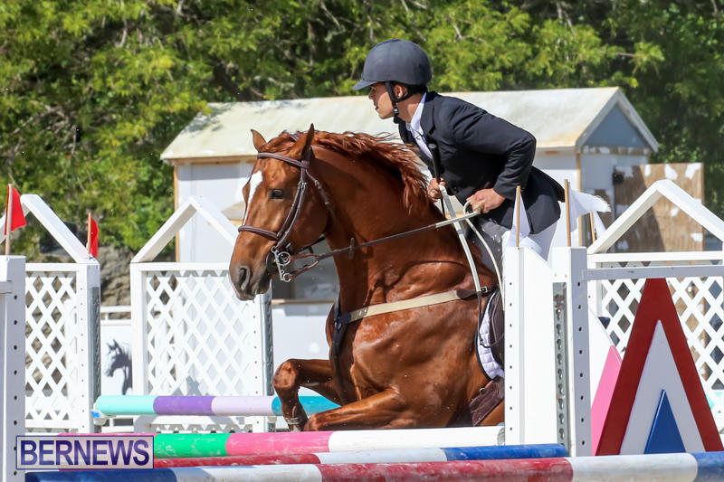 FEI-World-Jumping-Challenge-Bermuda-February-22-2015-82