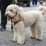 SPCA Paws To The Park Bermuda, March 1 2015-11