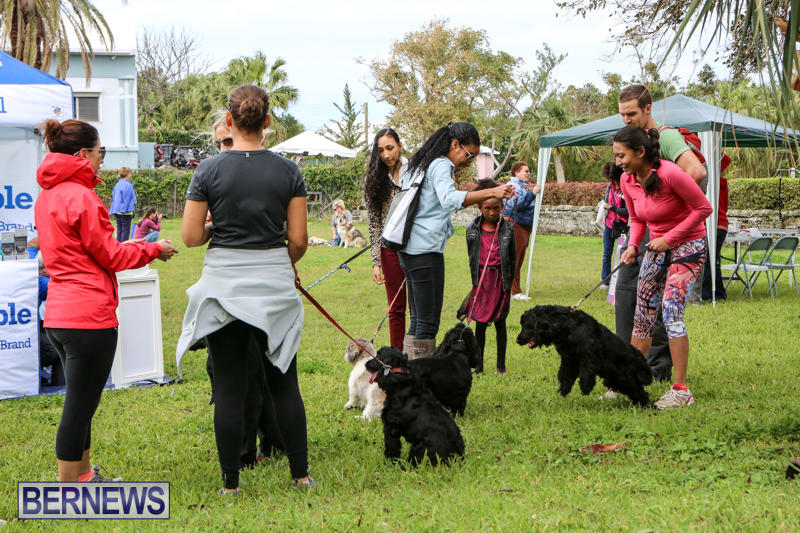 SPCA-Paws-To-The-Park-Bermuda-March-1-2015-14