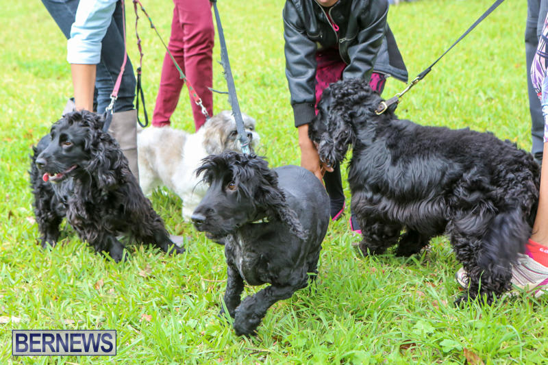SPCA-Paws-To-The-Park-Bermuda-March-1-2015-16