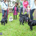 SPCA Paws To The Park Bermuda, March 1 2015-17