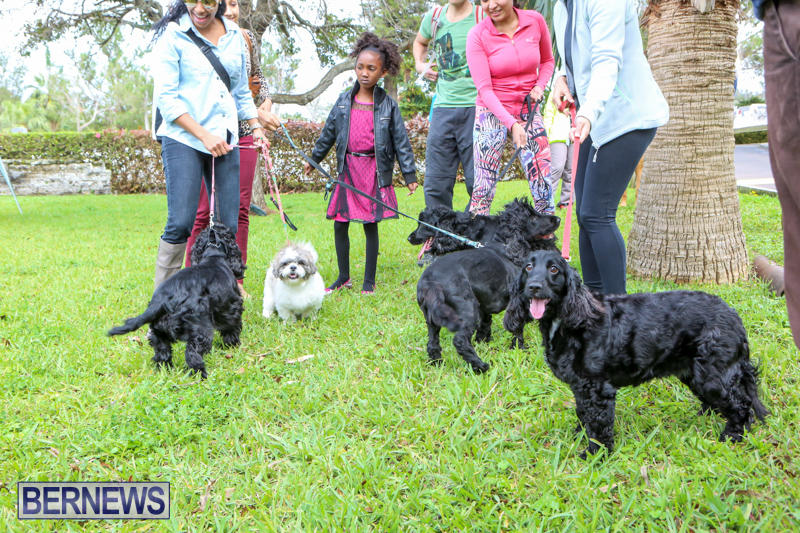 SPCA-Paws-To-The-Park-Bermuda-March-1-2015-17