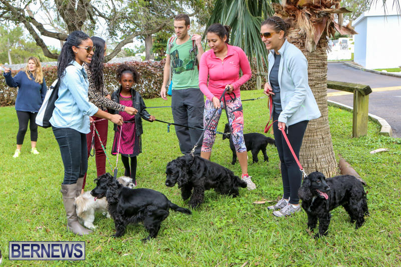 SPCA-Paws-To-The-Park-Bermuda-March-1-2015-18