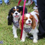 SPCA Paws To The Park Bermuda, March 1 2015-19