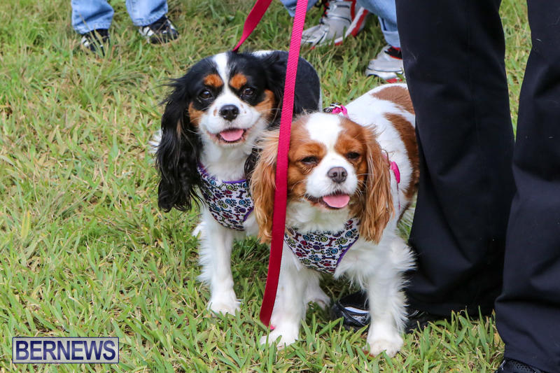 SPCA-Paws-To-The-Park-Bermuda-March-1-2015-19