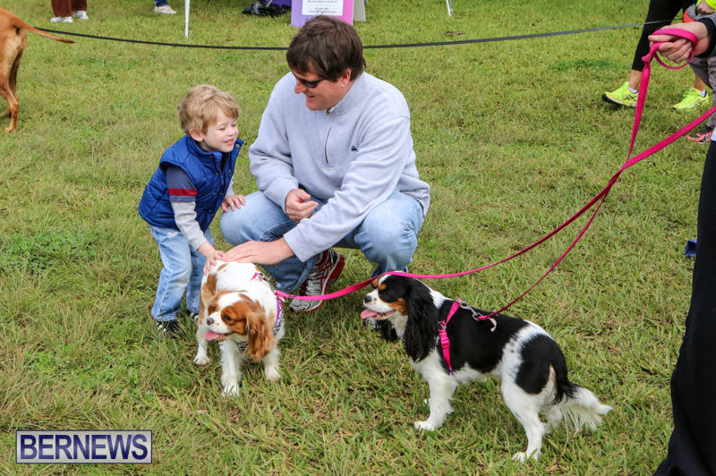 SPCA-Paws-To-The-Park-Bermuda-March-1-2015-20