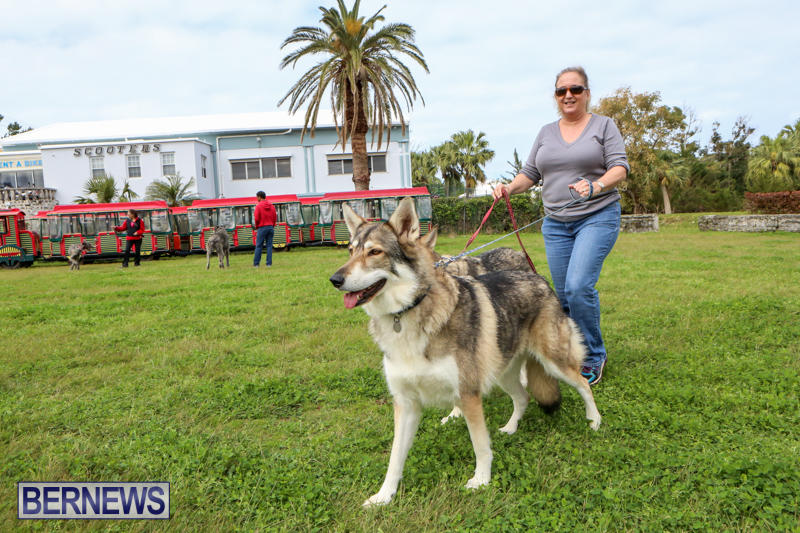 SPCA-Paws-To-The-Park-Bermuda-March-1-2015-25