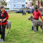 SPCA Paws To The Park Bermuda, March 1 2015-27