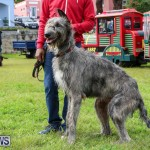 SPCA Paws To The Park Bermuda, March 1 2015-29