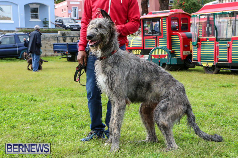 SPCA-Paws-To-The-Park-Bermuda-March-1-2015-29