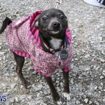 SPCA Paws To The Park Bermuda, March 1 2015-3