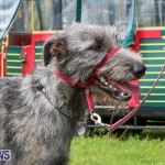 SPCA Paws To The Park Bermuda, March 1 2015-30