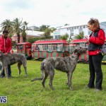 SPCA Paws To The Park Bermuda, March 1 2015-31