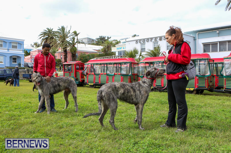 SPCA-Paws-To-The-Park-Bermuda-March-1-2015-31