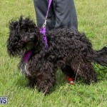 SPCA Paws To The Park Bermuda, March 1 2015-36