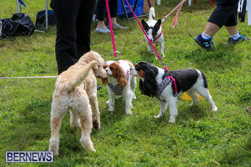 SPCA-Paws-To-The-Park-Bermuda-March-1-2015-38