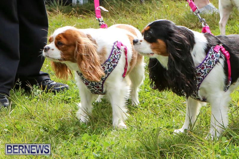 SPCA-Paws-To-The-Park-Bermuda-March-1-2015-39